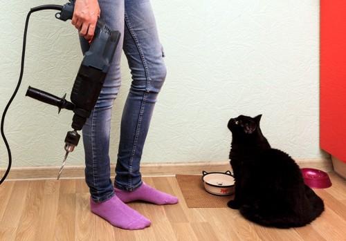 ドリルを持つ人と猫