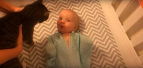 喜ぶ赤ちゃんと戸惑う猫