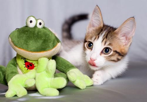 おもちゃを見る猫