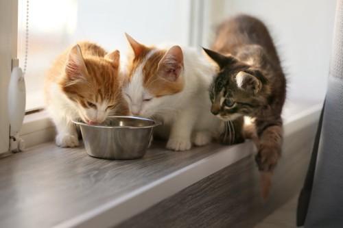 一つの器でごはんを食べる3匹の猫