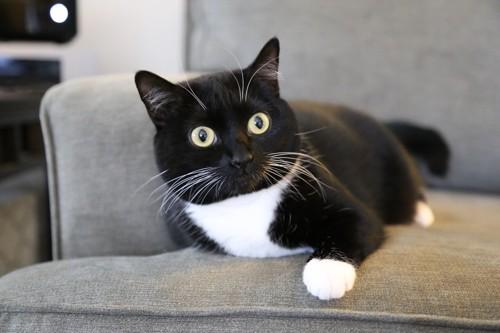 黒が多いぶち猫