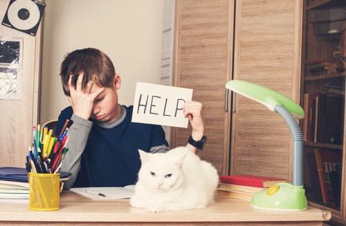 猫にお手上げの少年
