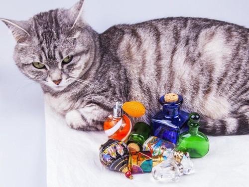 香水瓶の横に寝る猫
