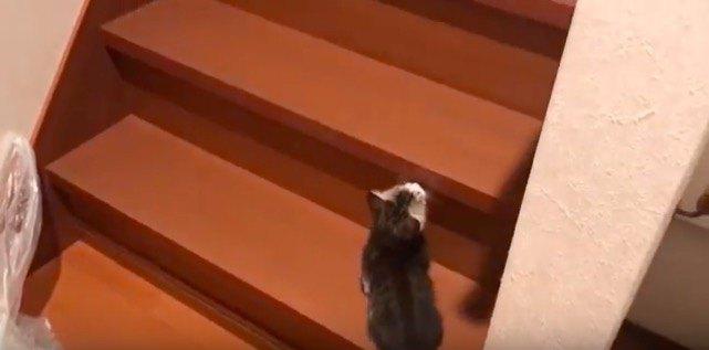 階段の子猫