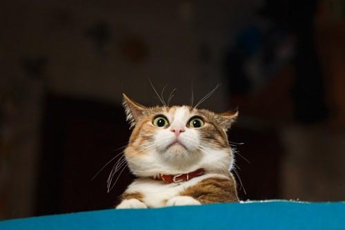 耳を澄ましている猫