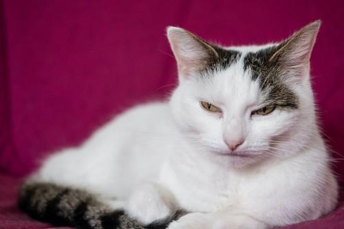 口を真一文字に結んで不機嫌そうな猫