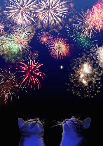 花火を見つめる二匹の猫