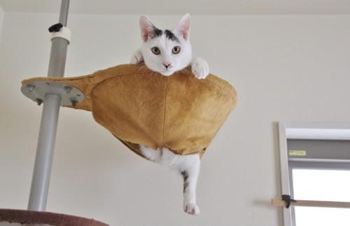 キャットタワーに居る猫