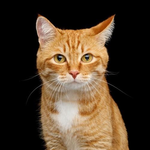 片耳を横に向ける猫