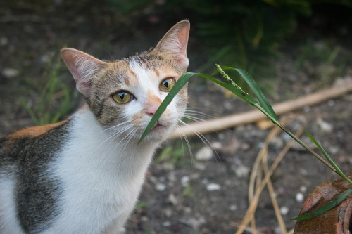 植物の匂いを嗅ぐ猫