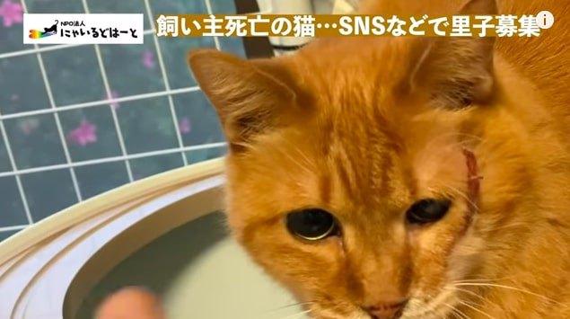 目が見えない猫