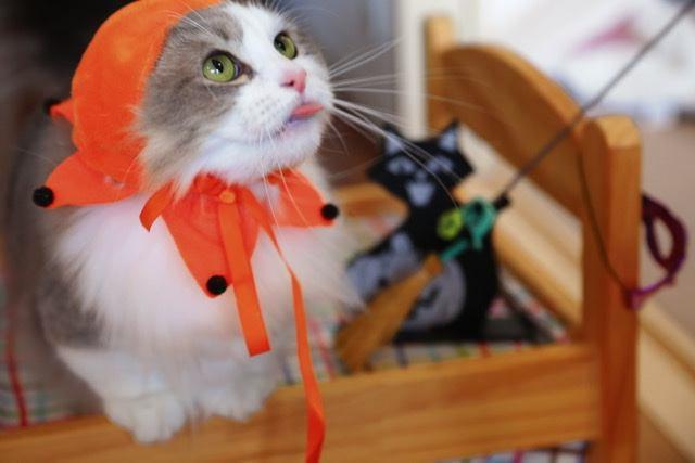 ハロウィン帽子をかぶった猫