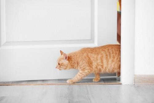 ドアから入る猫