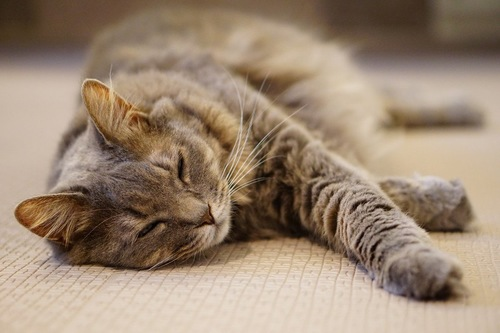 風呂場で寝る猫