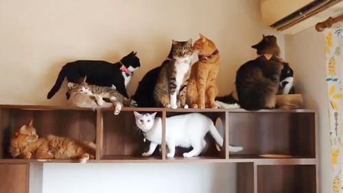 思い思いに冷房を楽しむ猫たち