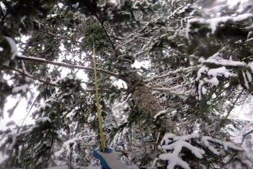 ぺブルスが立ち往生する木