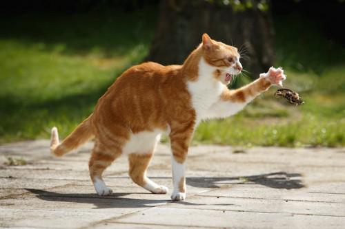 獲物を捕まえようとする猫