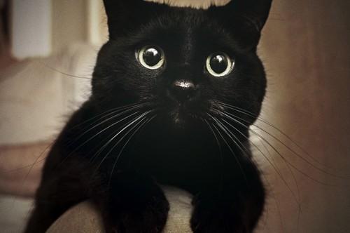 目がまん丸な黒猫