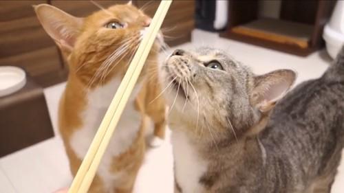 割り箸の匂いをかぐ