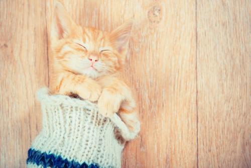 靴下の中で眠る子猫