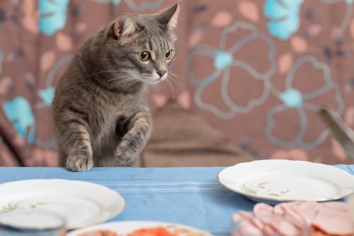 テーブルの上の皿を見る猫