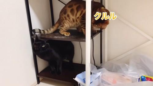 棚の上下にいる猫