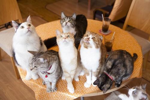 テーブルの上にいるたくさんの猫