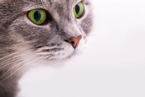 緑の瞳の猫アップ