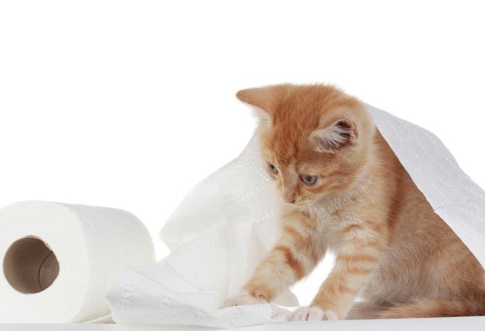 トイレットペーパーと子猫の写真
