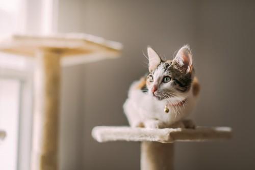 キャットタワーに乗って外を見る猫