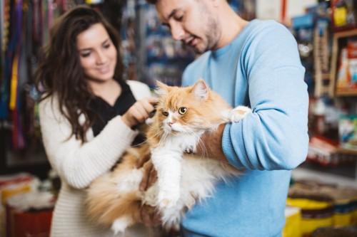 男女と抱かれる猫