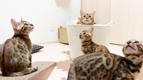 見上げる4匹の猫