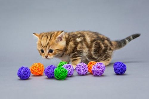 おもちゃを目の前にびっくりの子猫