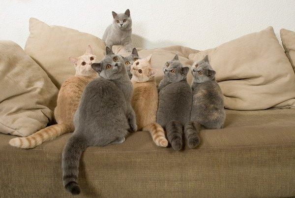 クッションの上から同じ方向を見つめる7匹の猫