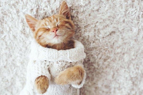 白い服に身を包んで寝る猫
