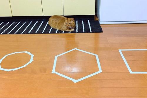 猫ホイホイと茶トラ猫