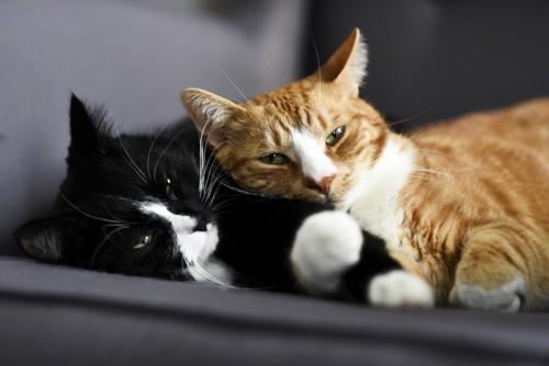 仲良く寝そべる2匹の猫
