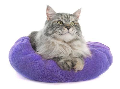クッションを満喫中の猫