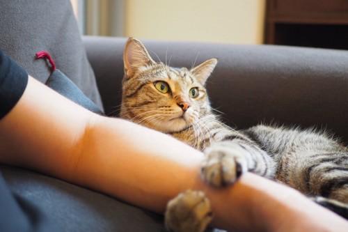 飼い主の腕を抱える猫