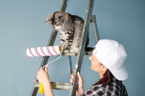 DIY中の女性とはしごに乗っている猫