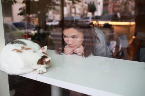 テーブルの上で眠る猫をじっと見つめる女性