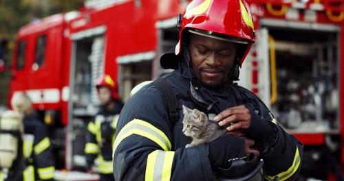 消防隊に助けられる猫