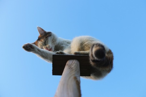 高い所でくつろぐ猫