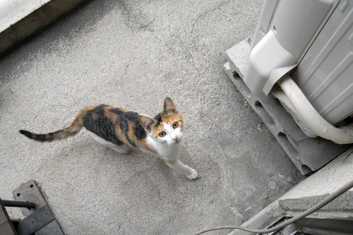見上げる外猫