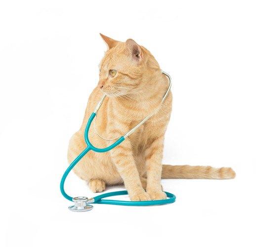 好酸球性肉芽腫の診察を受ける猫