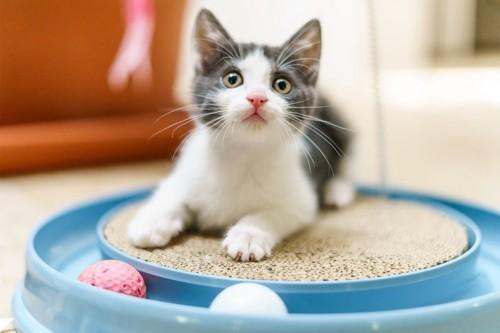 一人で遊ぶ猫猫