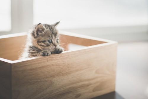木製の手作りのケージから顔を出す子猫