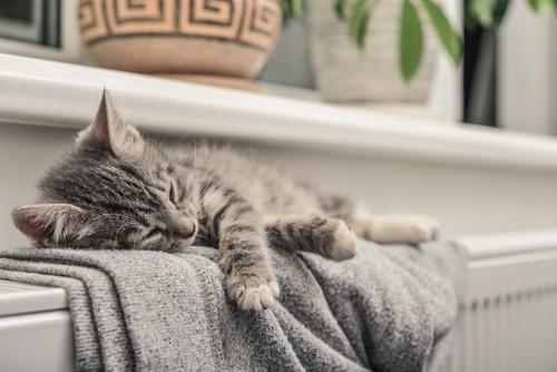 暖房の上で眠る子猫