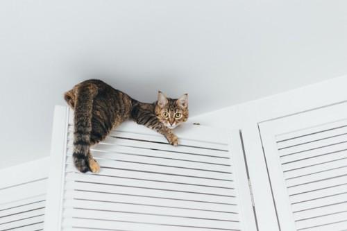 ドアに登る猫