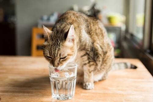 テーブルの上でグラスの水を飲む猫